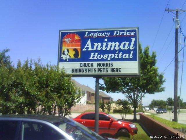 Chuck Norris brings his pets here