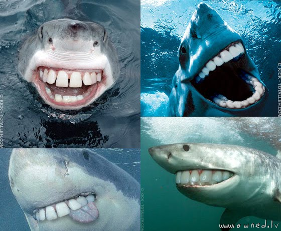 Funny Sharks Pictures