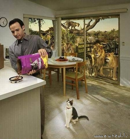 Whiskas advert