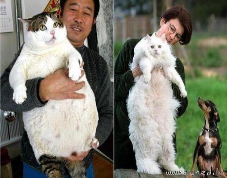 Huge cats