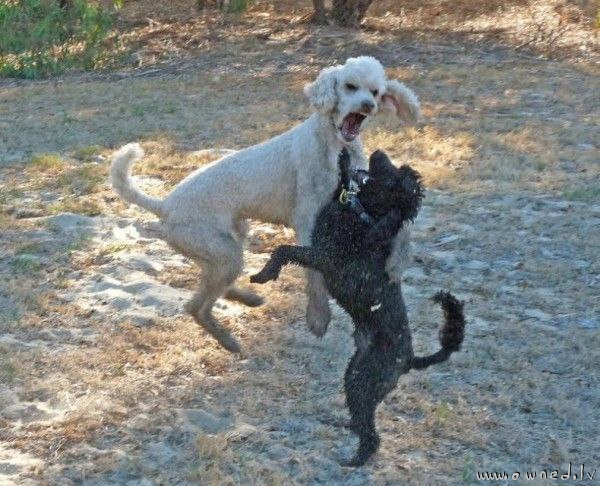 Dog mosh pit