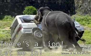 There is a lion