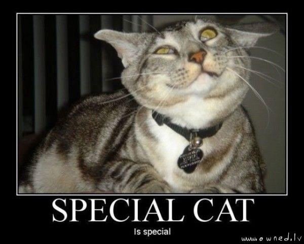 Special cat