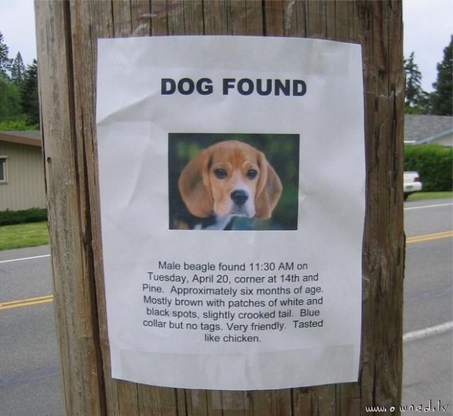 Dog found