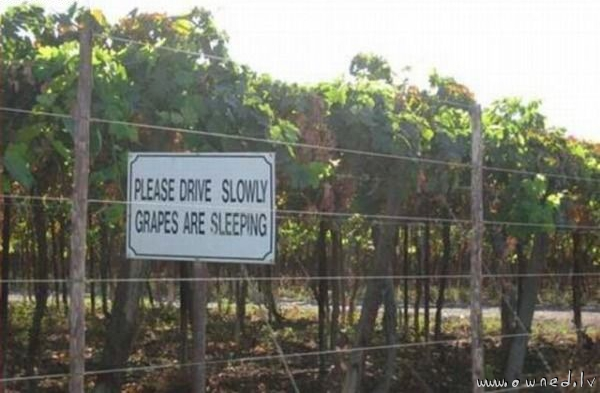 Grapes are sleeping