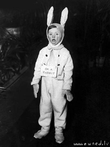 Im a rabbit
