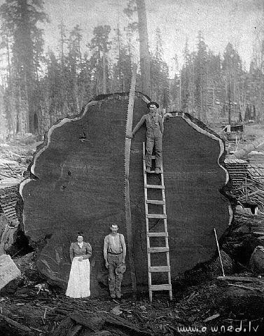 Huge tree