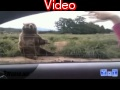 Best fails of 2011