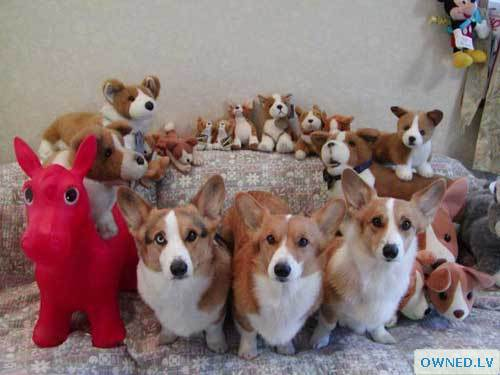 Can You Spot The Real Dogs....